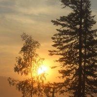 Утром солнце восходит в тумане :: Сергей Чиняев