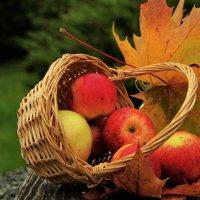 Яблочки румяные :: Татьянка *