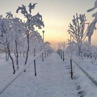 Дорога в туман. :: Елена Багирова