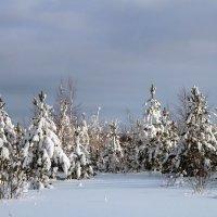 С первым днем зимы! :: Алла ZALLA