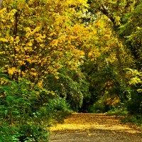 В ботаническом саду осенью :: Светлана