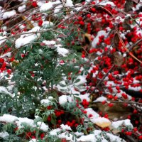 Дыхание зимы... :: Тамара (st.tamara)