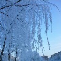 Такая разная зима ... :: Алёна Савина