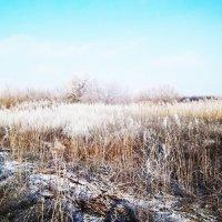 Морозное утро :: Татьяна Королёва