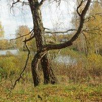 Осенний вальс :: Ольга Анянова