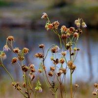 последние цветы ноября :: Александр Прокудин