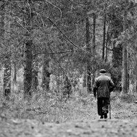 """"""" Искать утешения в лесу"""" ( из цикла-""""Одиночество"""") :: Игорь Сорокин"""