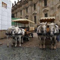 Прогулка по Дрездену ... :: Алёна Савина