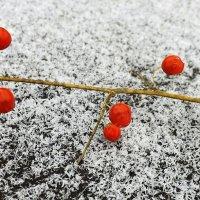 Красное и белое :: Андрей Заломленков