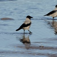 подруги на море :: linnud