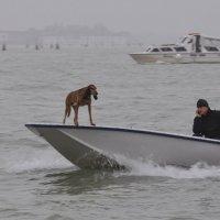 Трудно быть в Венеции собакой :: Юрий Матвеев