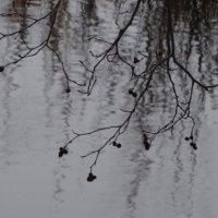 бег по воде :: Михаил Жуковский
