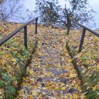 Вверх или вниз? :: Oleg4618 Шутченко