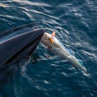 кит :: олег