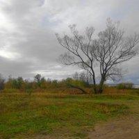 На побережье Ушаковского залива в октябре :: Маргарита Батырева