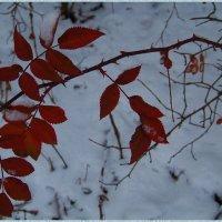 Осенние листья.... :: Любовь К.