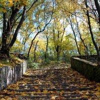 Старая лестница. :: Николай Сидаш