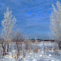 Солнечный зимний день :: Вера Андреева