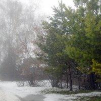 Густой туман декабря :: Ольга П