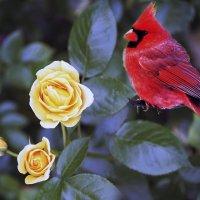 Вкушая Розы аромат ...... :: Aleks Ben Israel