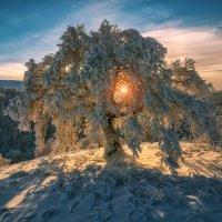 Про то как Солнце запуталось в ветвях старого дуба. :: Андрей Лепилин