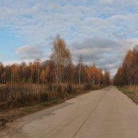 осенняя дорога :: ninell nikitina