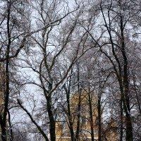 Декабрьский пейзаж. :: Михаил Столяров
