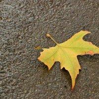 Я - желтый лист под вашими ногами... :: Светлана