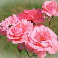 Визит в розовый мир :: Swetlana V