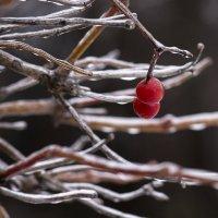 В ледяном плену :: Вера Сафонова