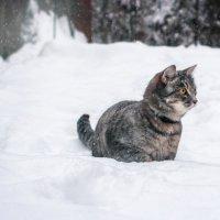 зима пришла :: Наталья Скипина