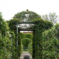 В Королевском саду :: Елена Павлова (Смолова)