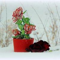 Розы,что не вянут на морозе. :: nadyasilyuk Вознюк