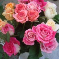 Розы на выбор :: Нина Корешкова