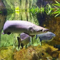 рыбка :: Laryan1