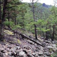 Национальный парк Алханай :: Алексей Rus
