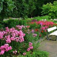 Planten un Blomen. Hamburg :: Nina Yudicheva
