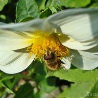 Зацветают цветы на наших страницах.Полет цветка :: Лидия (naum.lidiya)