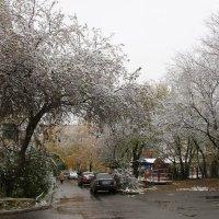 Первый снег в октябре :: Олег Афанасьевич Сергеев