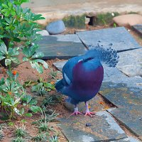 Синяя птица :: Анатолий Иргл