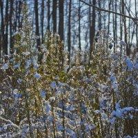 первый снег :: Седа Ковтун