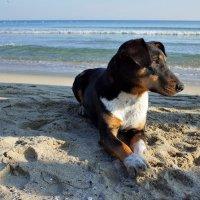 Размышления на берегу моря :: Swetlana V