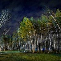Берёзовый хор с лысым дирижёром :) :: Sergey-Nik-Melnik Fotosfera-Minsk