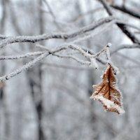 Зимние зарисовки :: Алексей .