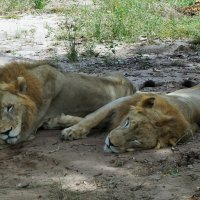 VINPEARL Safari :: Мила C