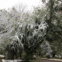 Первый снег в октябре. :: Олег Афанасьевич Сергеев