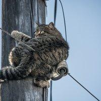 И снова про кота. (Спасаясь от собак) :: Андрей Поляков