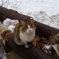 Уличная кошка :: Andrew