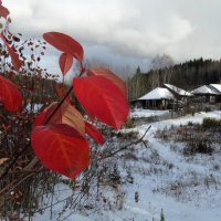 Красные отметины октября :: Валерий Чепкасов