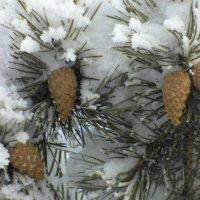 После снегопада. :: nadyasilyuk Вознюк